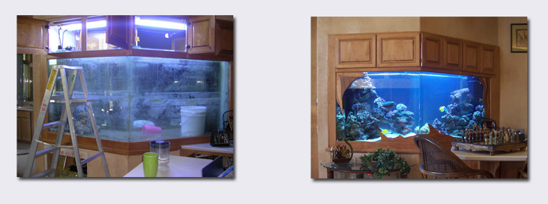 Colorado 39 S Premier Aquarium Installation And Service Company
